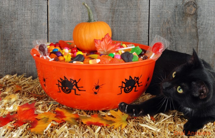Black cat with basket of halloween candy